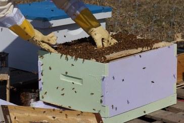 Основни правила при работа с пчели