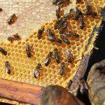 Проекти за над 6 млн. лв. са одобрени по Националната програма по пчеларство за 2020 г.