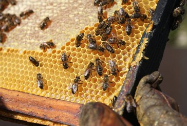 Ограничава се употребата на продукти за растителна защита с цел опазване на пчелните семейства