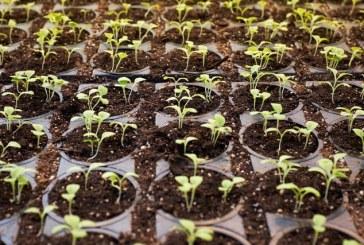 Производство на качествен разсад от основните зеленчукови култури