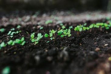 Профилиране на почвената повърхност при отглеждане на зеленчукови култури