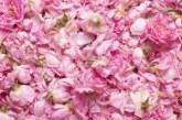 Трудна се очертава годината за розопроизводителите