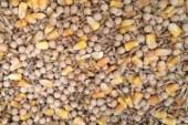 Зърнено-бобови фуражи за свине