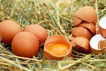 Какво знаем и какво не знаем за кокошото яйце