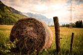 Рентата се договаря само в пари в новия закон за земеделските земи