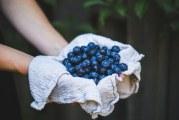 Расте търсенето на боровинки