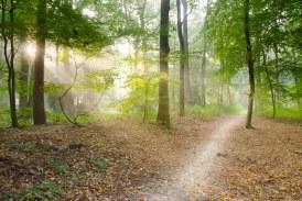 Предстои прием на документи за закупуване на поземлени имоти в горски територии, собственост на физически лица