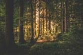 Над 80 000 проверки са извършени в горските територии през ноември и декември