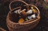 Все повече гъбари сменят занаята си заради липсата на работа и пари