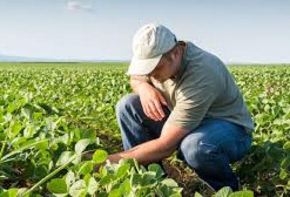 Горещините погубват полските зеленчуци