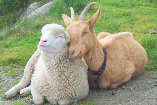 Стопани от цялата страна ще дарят животни на колегите си от Странджа