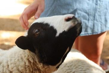 Животни се гледат с много труд и любов