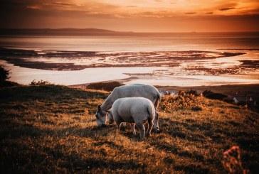 Потърпевш животновъд от село Воден подкрепи действията на БАБХ
