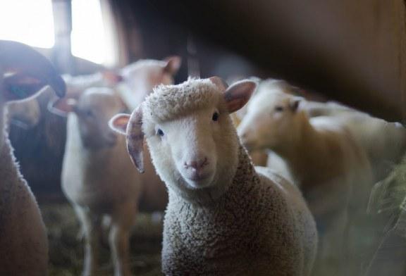 Ветеринари подкрепят мерките за борба с чумата
