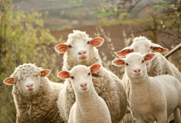 Вече вземат втори проби от животните в наблюдаваната зона в Ямболско