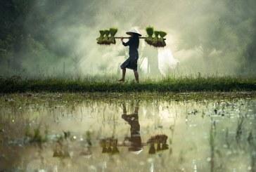 Как природата се приспособява към екстремните климатични условия