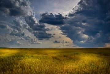 60 % от пшеница във Видинско е още на полето