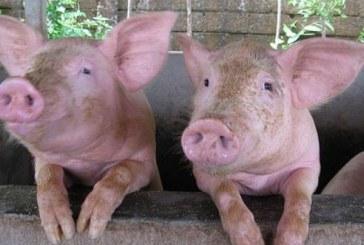 Незаконно са транспортирали животни в Мездра