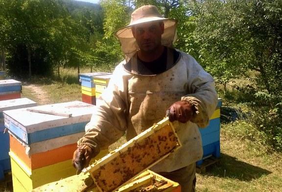 Цената на меда трябва да е между 7,00 – 8,50 лв/кг.
