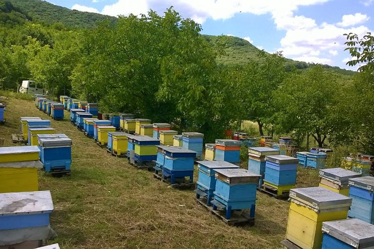 Аз-избирам-БИО-пчелин-2