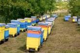 Как да изберем място за пчелин