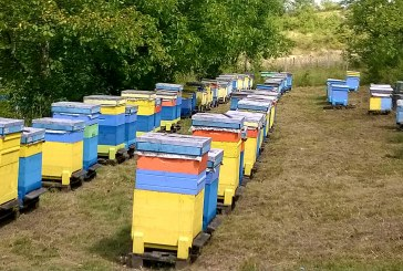 4,5 млн.лв по de minimis ще бъдат изплатени на пчеларите