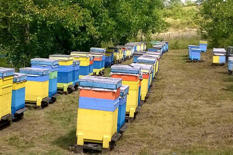 Аз-избирам-БИО-пчелин-3