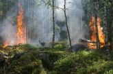 До 8 години затвор за умишлен горски пожар