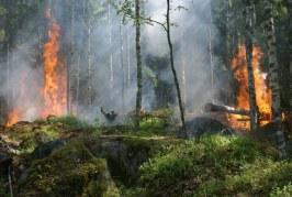 Расте рискът от горски пожари
