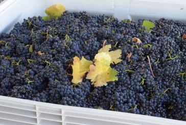 Повече грозде за повече вино