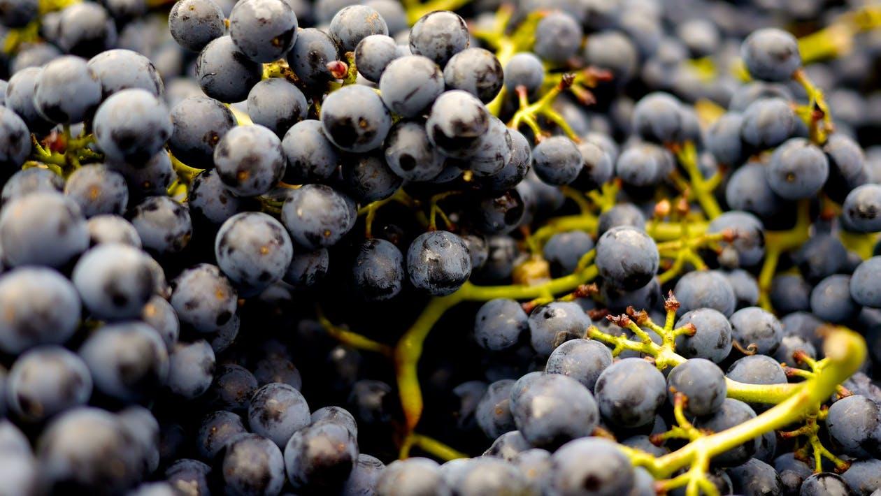 Дъждовете съсипаха реколтата от грозде