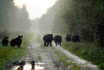"""В природен парк """"Сините камъни"""" ще бъдат поставени капани за диви прасета"""