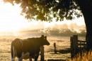 Констатираха четири ферми със заболяването Ку-треска в Област Ямбол