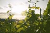 """Приемът по мярка """"Събиране реколтата на зелено"""" продължава до 5 юни 2020 г."""