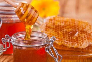 Открити уроци разпалват детския интерес към меда и пчелите
