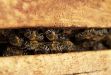Пчеларите подготвят кошерите за зимата