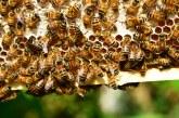 Разпознават ли пчелите пестицидите в нектара