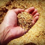 Фермерите с предупреждение: Европа може да остане без храни