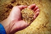 467 кг/дка пшеница среден добив в Търговищко
