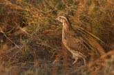 В събота започва ловният сезон за птици