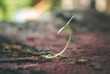 Растенията разпознават частите от деня