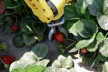 Кога роботи ще започнат да берат ягоди