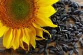 Жегите в Европа може да повлияят на реколтата и догодина