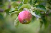Задава се недостиг на плодове и зеленчуци в Европа