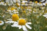 Информация за реализираните билки се подава до 20 януари
