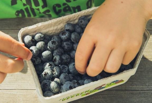 МС реши кой и как ще раздава плодове и мляко в учебните заведения