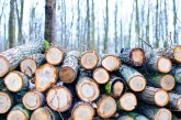 675 проверки направиха горски инспектори за седмица