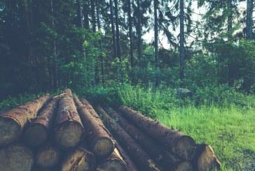 Какво се случва с увредената дървесина