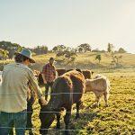 Вижте как ще се допускат земеделските стопани до земи и животновъдни обекти