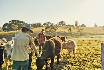 Кметът на Сунгурларе със спешни мерки за животновъдите заради кризата